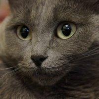 cat :: Влада Лаптева