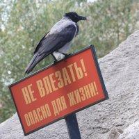 Не влезаааать же...!! :: Дмитрий Сушкин