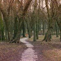 В старом парке... :: Nonna