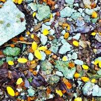 опавшие листья :: Alex