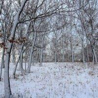 Природа - лучший фотошопер... :: Dmitriy Strogalin