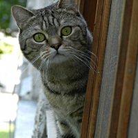 кот-соседский )) :: Маry ...