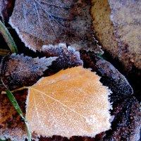 Первый морозец.. :: Лариника Кузьменко