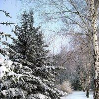 Снежность :: Irina