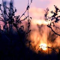 Закатившееся солнце... :: Ирина Лядова