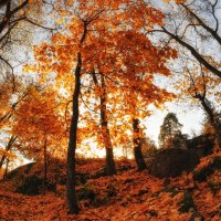 Осень в Монрепо /2 :: Евгений Плетнев