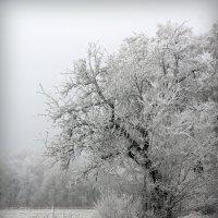 Зима :: Елена Мизенко