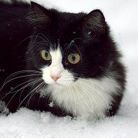первый Мусин снег :: Олег Петрушов