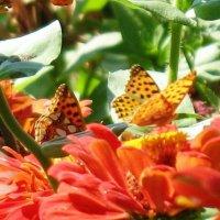 Бабочки :: Екатерина Василькова