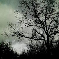 Однажды в лесу... :: Аทลﮎłล ﮎÌА