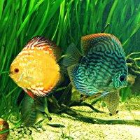 рыбки!) :: Маry ...