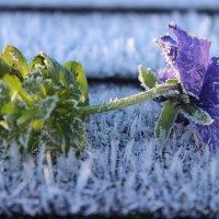 Дыхание зимы :: Mariya laimite