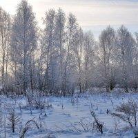 Зимний пейзаж. :: Андрей В.
