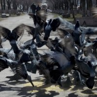 Пернатый взрыв :: Sergey Turitsyn Турицын Сергей