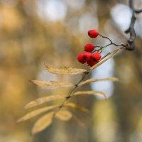 Осенняя..... :: Анна Слободенюк