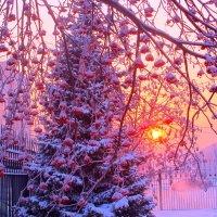 В морозный день, в закатном солнце, увитая гирляндами рябин :: Нина северянка