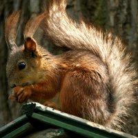 ...и орешки всё грызёт... :: Наталия Короткова