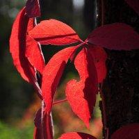 Autumn :: Алексей