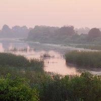 Влажным утром у реки 1 :: Юрий Морозов