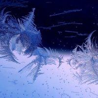 невесомость звездочек снежно-ледяных... :: Татьяна .