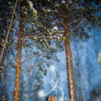 В зимнем парке :: Сергей Сорока