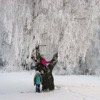 Ах,зима! :: Геннадий Ячменев