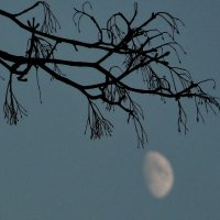 В лунном свете! :: Владимир Шошин