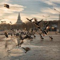 Не первую зиму зимуем... :: Ирина Данилова