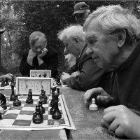 Правильный ход... :: Дмитрий Киселев