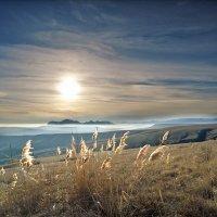 зимние туманы :: viton