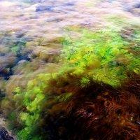 Морские краски :: Ivan teamen