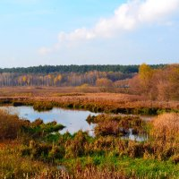 Осень :: dimakoshelev Кошелев