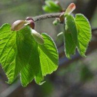 Этюд с зелёным листиком :: Виталий Авакян