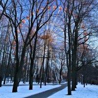 В зимнем парке. :: Nonna