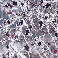 Зимний сад :: Vinsent ...