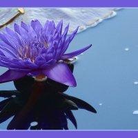 Flower :: Gene Brumer