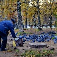 городские сизари :: gribushko грибушко Николай