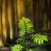 В чаще леса :: Денис Антонов