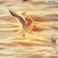 by Nar :: Nari Samed