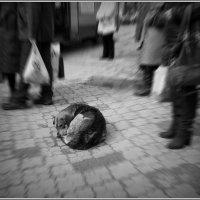 Равнодушие... :: Владимир Шошин