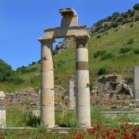 Маки древнего Эфеса :: Valeriy(Валерий) Сергиенко