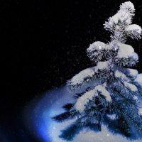 Зимняя красавица :: Кристина Пашкова