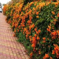 забор из цветов :: evgeni vaizer