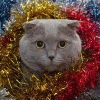 С Новым Годом!!! :: Александр