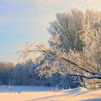 Поёт зима, аукает, мохнатый лес баюкает... :: Евгений Юрков