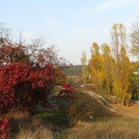 Осенний пейзаж :: Юрий Яловенко