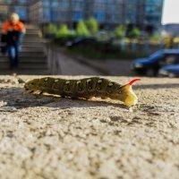 Вот стану бабочкой, и все меня заметят! :: Борис Ряплов