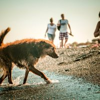 Мокрая собака :: Александр Хвостов