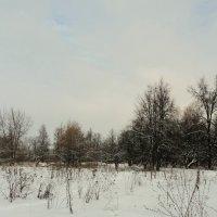 Просто зима.. :: Лариника Кузьменко