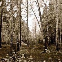 .........как первый снег расстаял..... :: Стил Франс